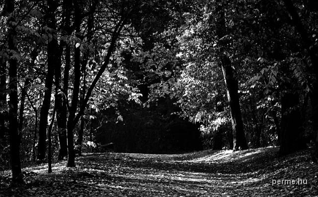 KLIKK - Sóstói erdő 2012