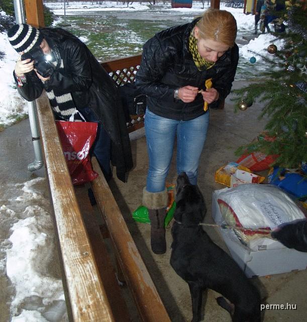 KLIKK - Állatok karácsonya - Nyíregyháza